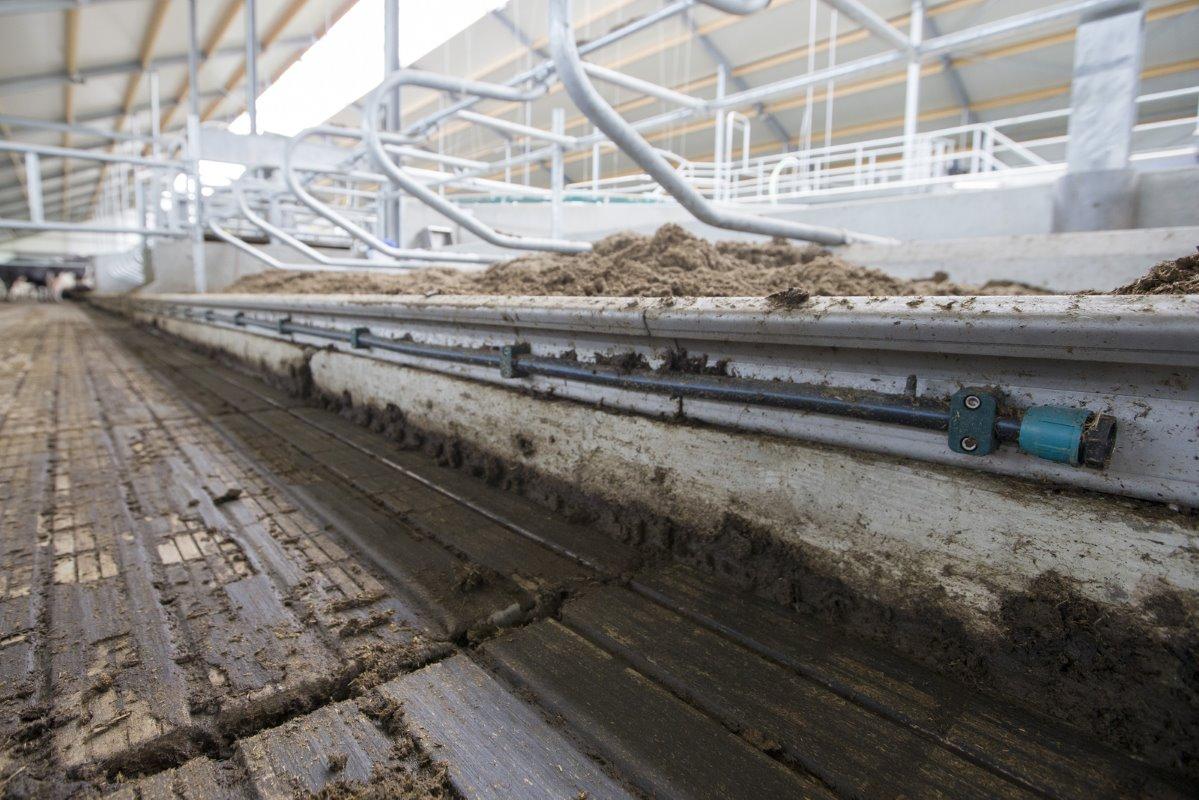 Op naar 2 3 miljoen kilo melk in nieuwe stal melkvee100plus - Carrousel vloer ...