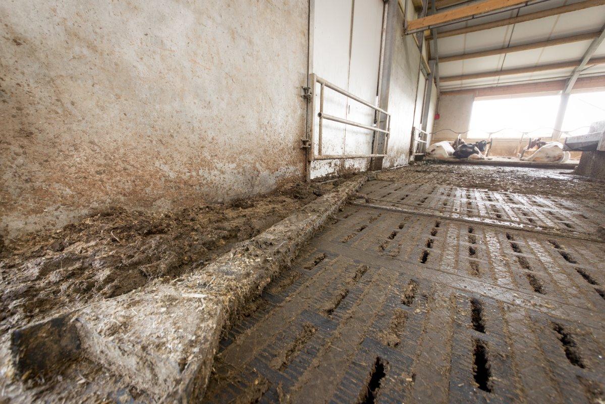 Hoge capaciteit carrousel groot pluspunt melkvee100plus - Carrousel vloer ...