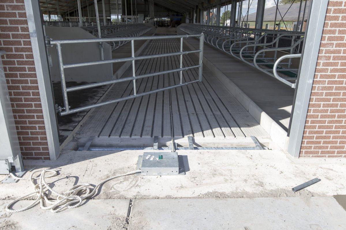 Rust en ruimte in 36 stands buitenmelker   melkvee100plus
