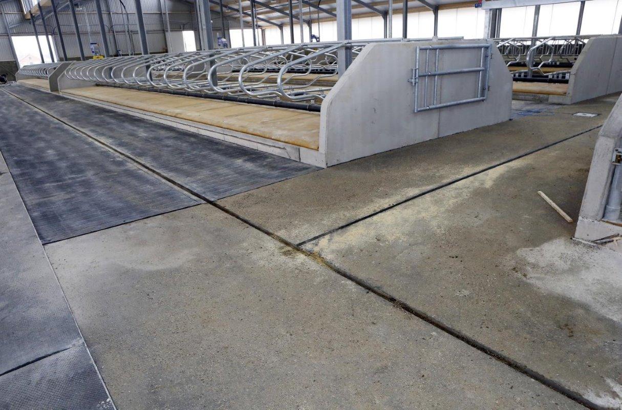 Welzijn en gemak in lichte stal melkvee100plus - Carrousel vloer ...