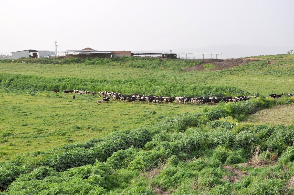Turkish government supports its dairy farmers
